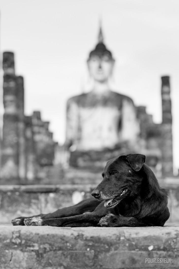 photographe geneve thailande ruines temple bouddha
