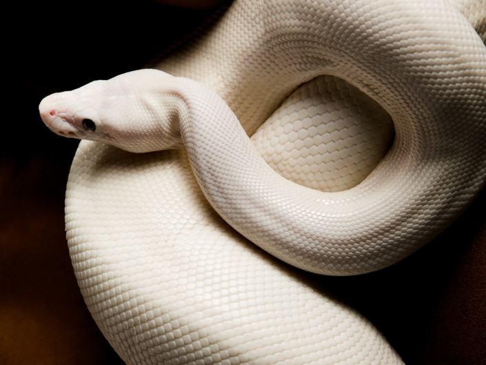 photographe geneve carouge serpent nu