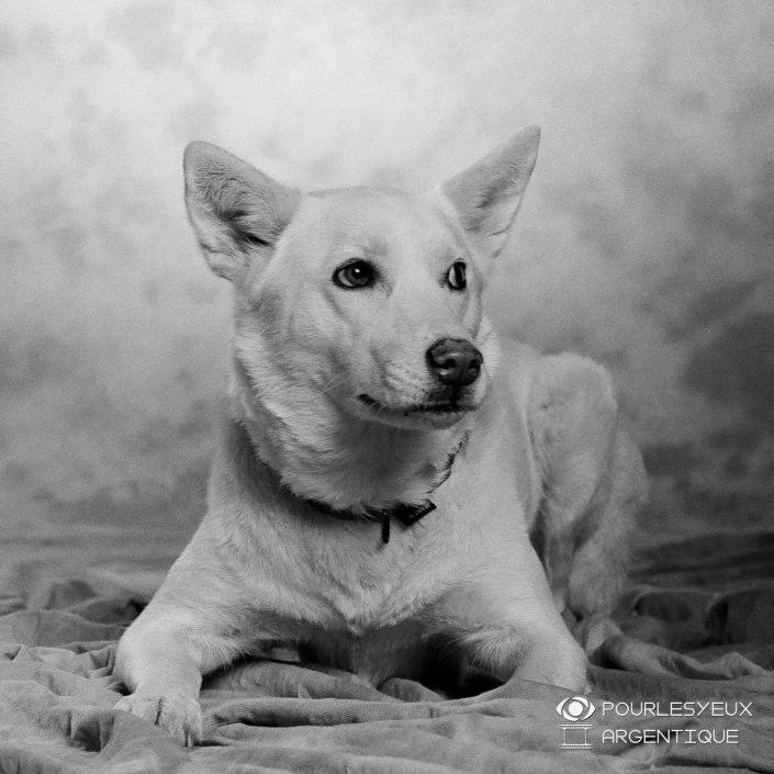 portrait photographe genève séance photo argentique chien animaux