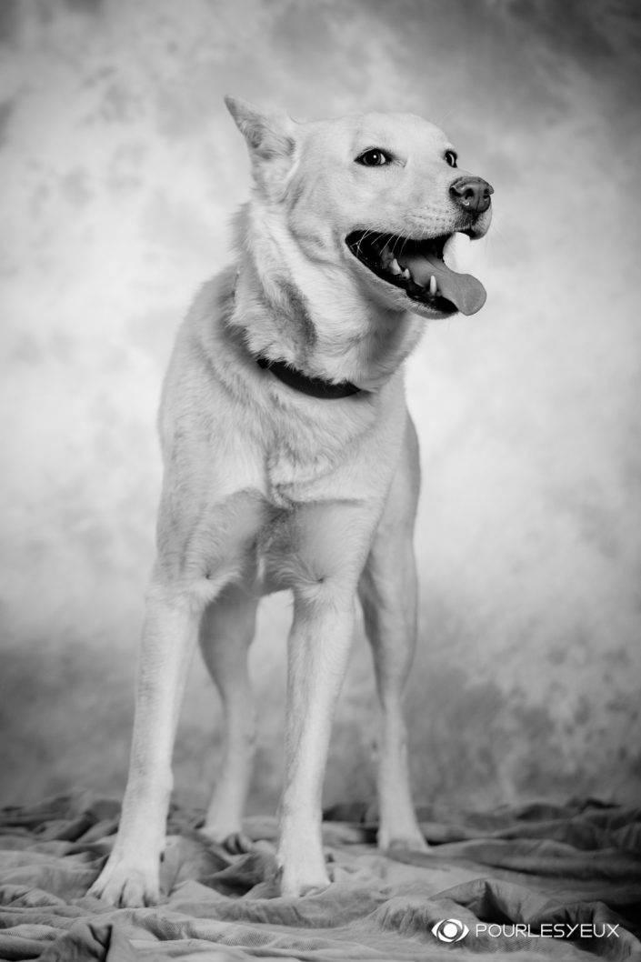 portrait photographe genève séance photo chien animal petshoot petbook